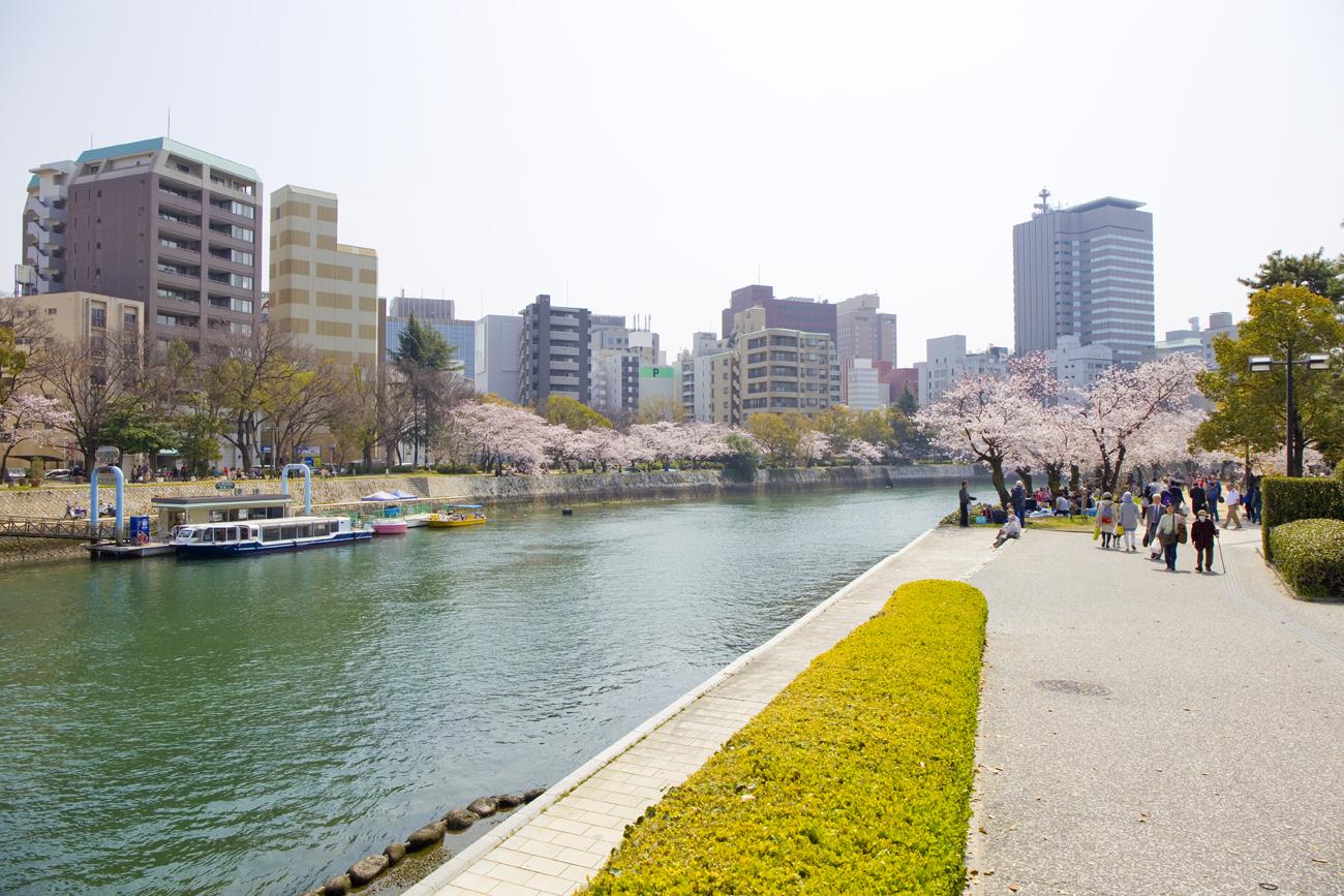 平和記念公園 桜1
