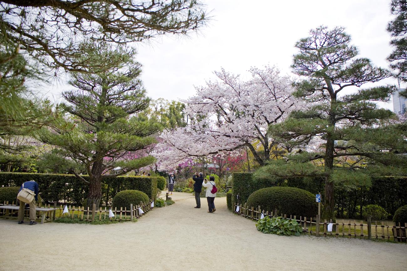 縮景園 桜3