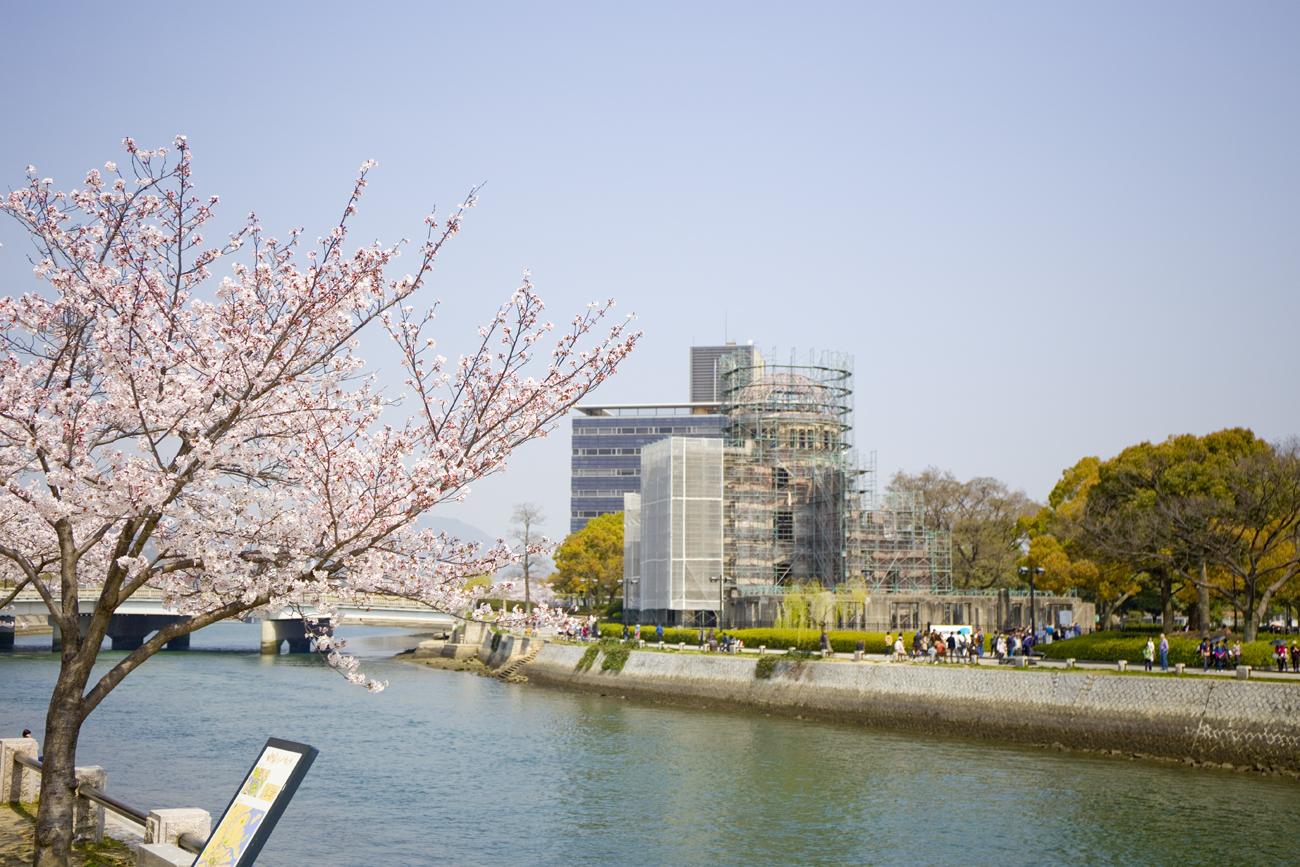 平和記念公園 桜3