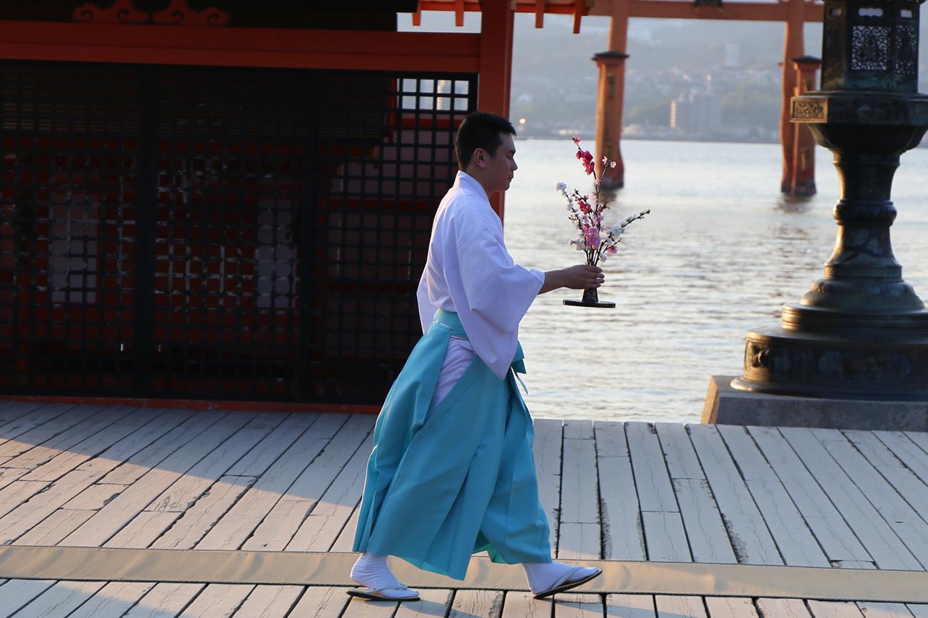 宮島厳島神社の桜花祭5