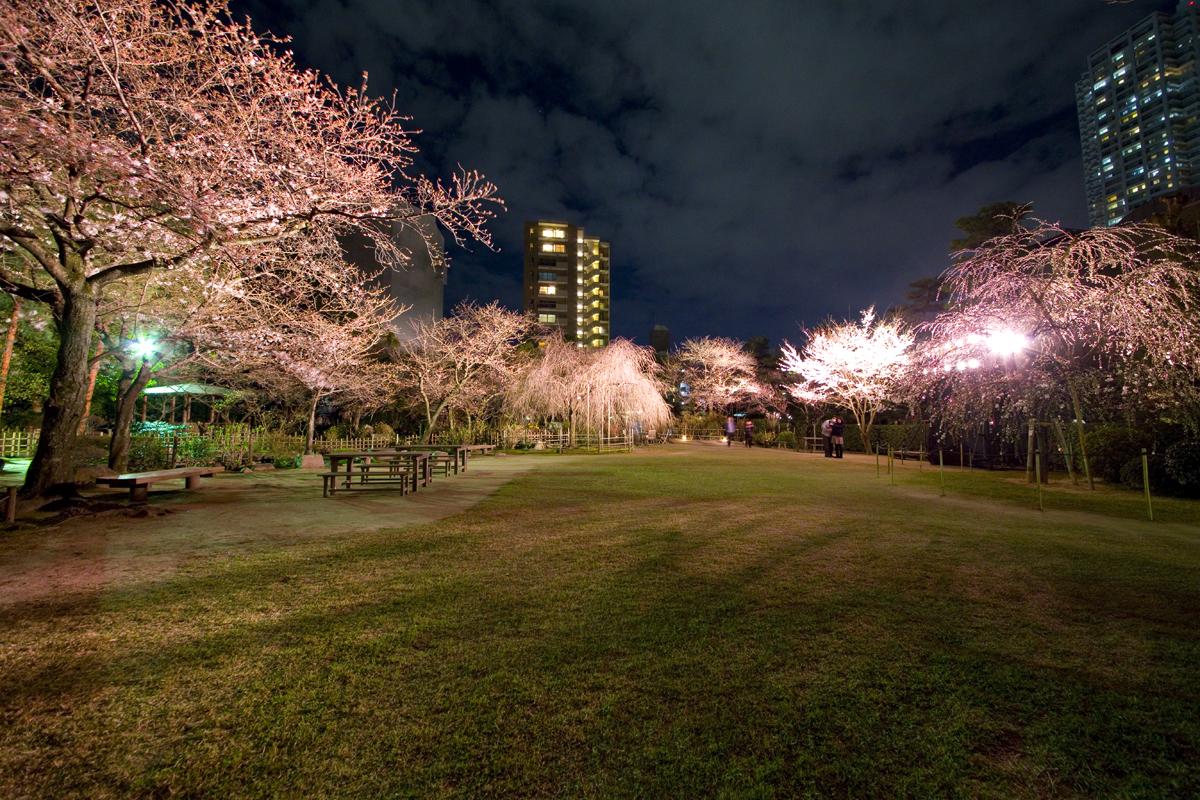 縮景園で今年も夜桜特別開園がはじまります